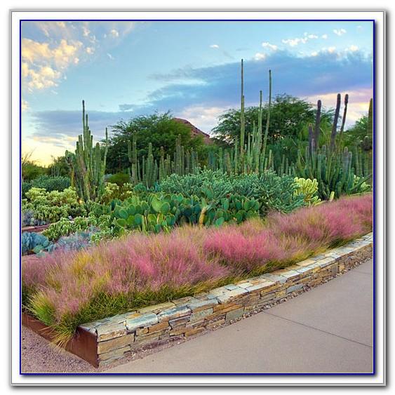 Desert Botanical Garden Phoenix Free Day