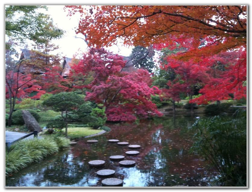 Fort Worth Botanical Gardens Fall