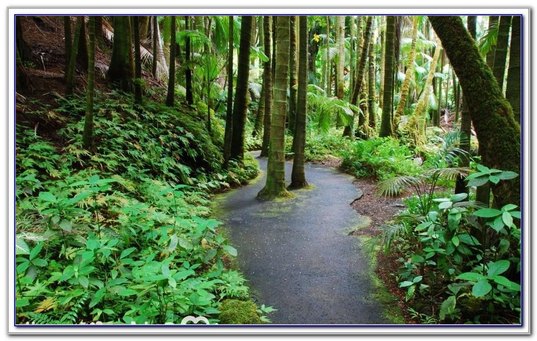 Hawaii Tropical Botanical Garden Papaikou Hi