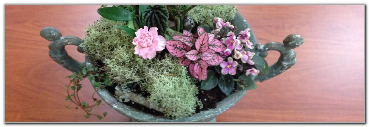 Lewis Ginter Botanical Gardens Winter
