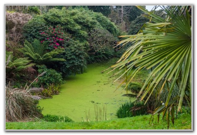 Lost Gardens Of Heligan History
