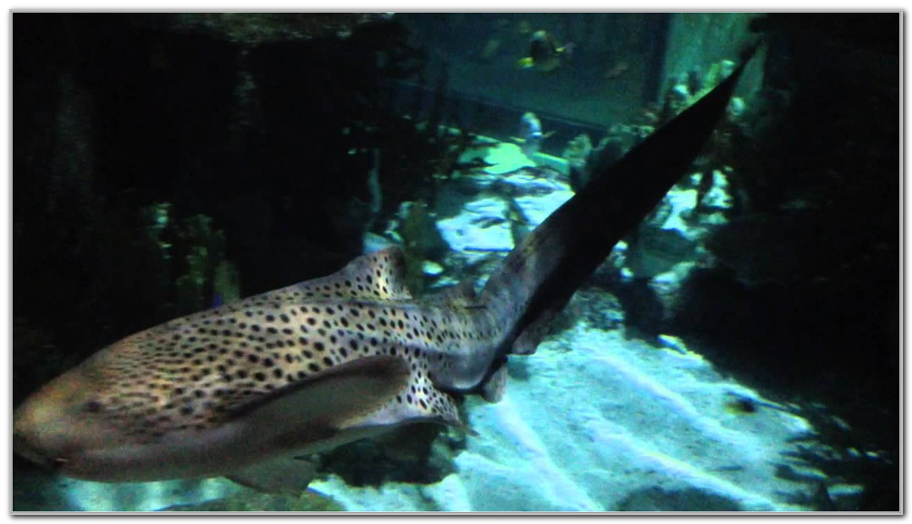 Moody Gardens Galveston Tx Aquarium