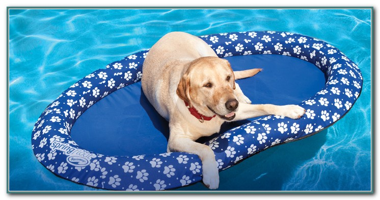 Pool Floats For Dogs