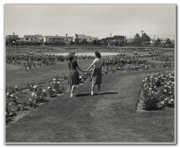 San Jose Municipal Rose Garden History