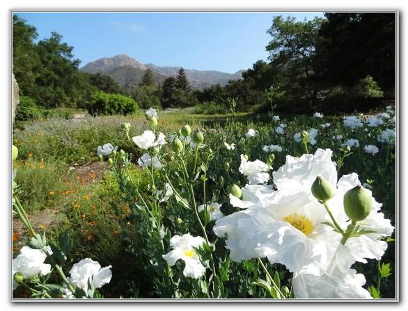 Santa Barbara Botanic Garden Santa Barbara Ca