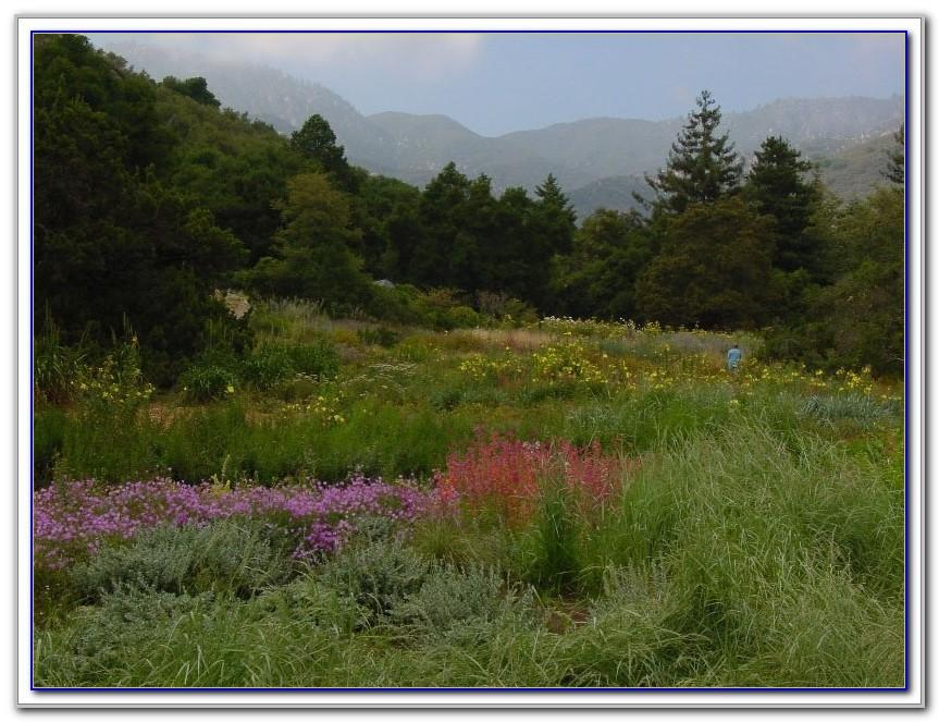Santa Barbara Botanic Garden Staff