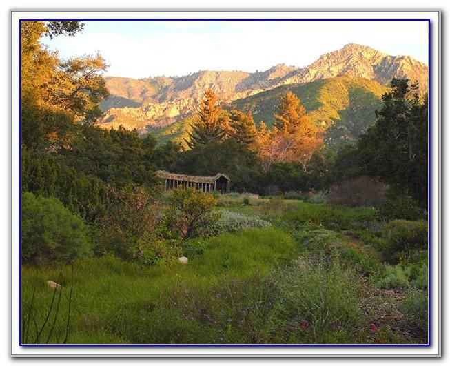 Santa Barbara Botanical Gardens Volunteer