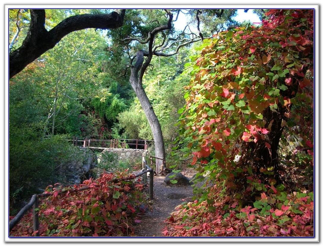 Santa Barbara Botanical Gardens Wedding