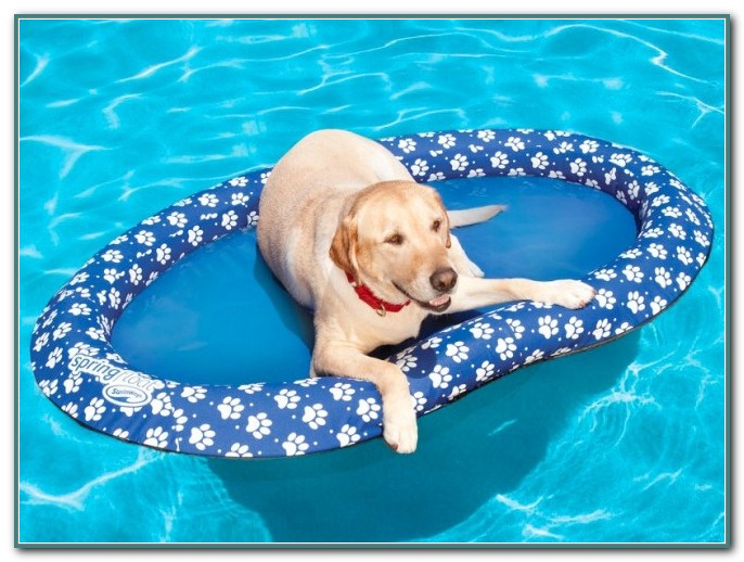 Swimming Pool Floats For Dogs