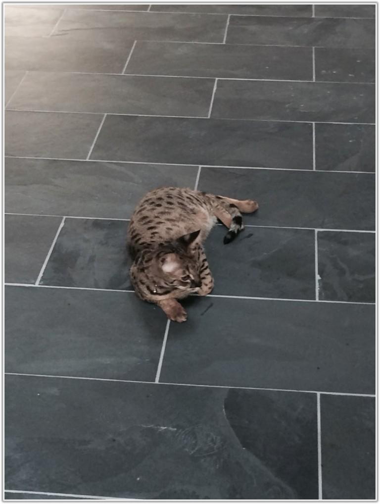 Montauk Black Slate Tile Home Depot