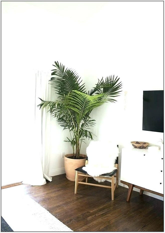 Best Fake Plants For Living Room