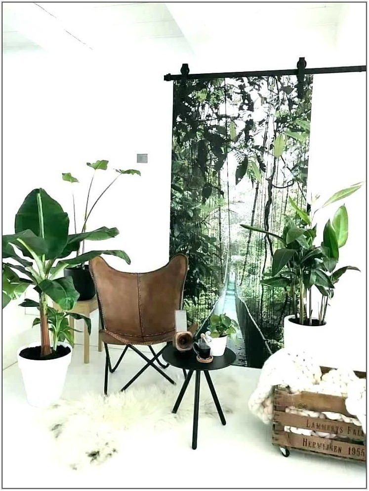 Best Indoor Plants For Living Room