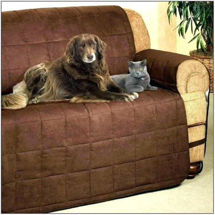 Best Living Room Furniture For Dog Owners