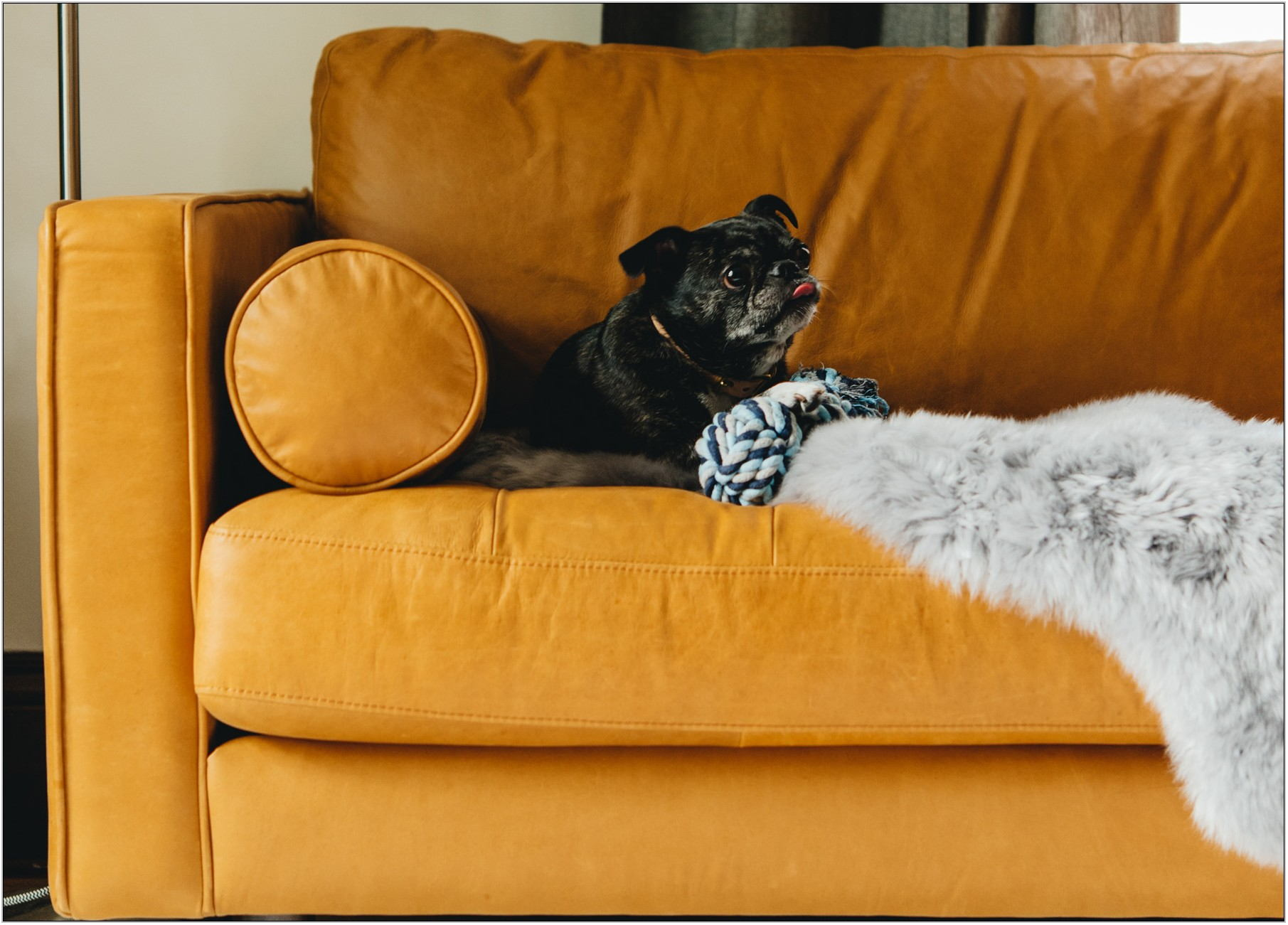 Best Living Room Furniture With Pets