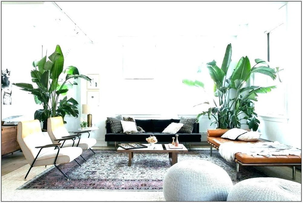Living Room Plant Co