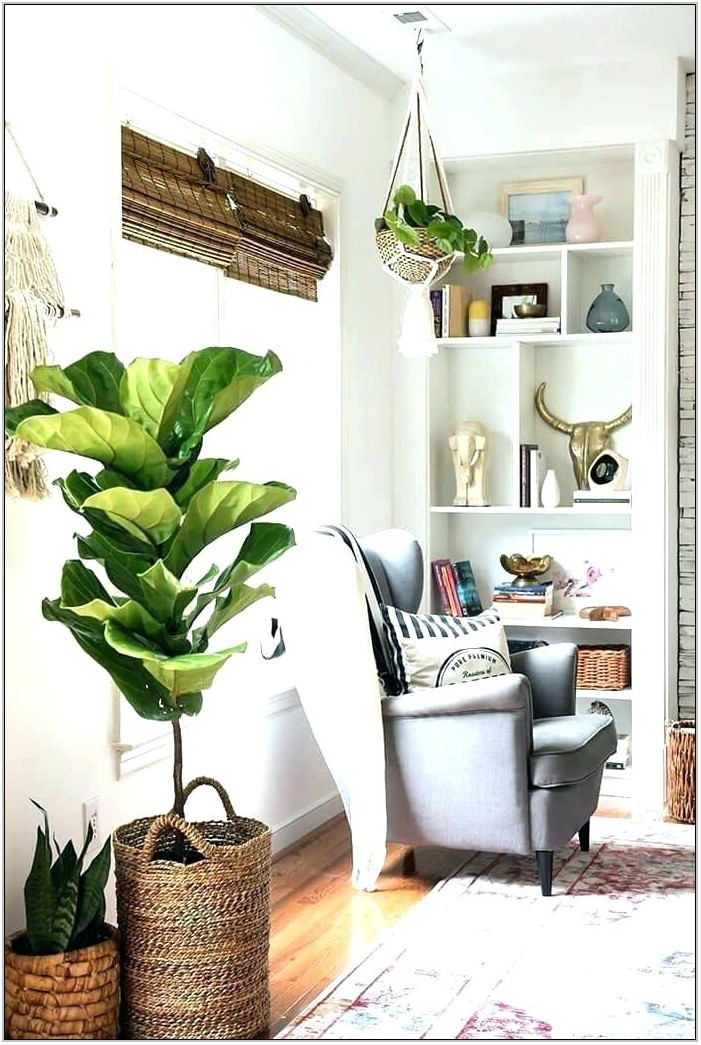 Plants For Living Room Decor