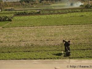Farmer along road in Dali