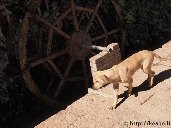 Dog and watermill in Lijiang Old Town