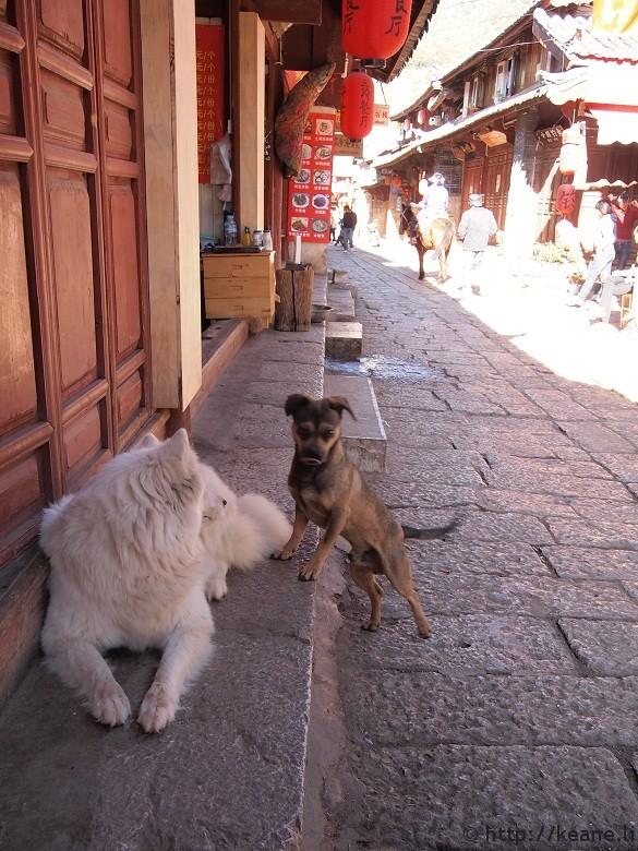Two dogs in Lijiang's Shu He Ancient City