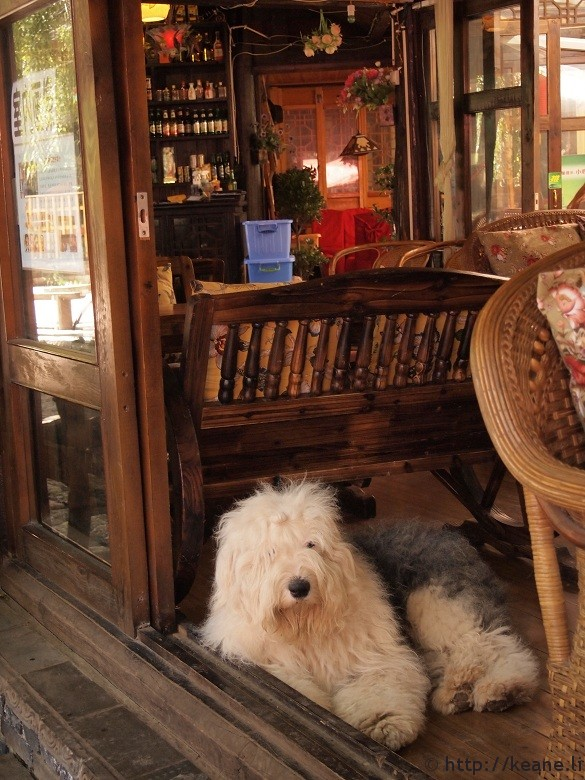 Fluffy white dog in a shop in Lijiang's Shu He Ancient City