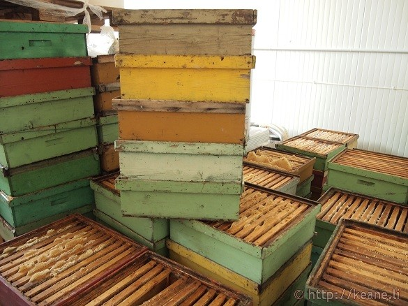 Bee farming and honey at Miele Praconi in San Mauro Pascoli