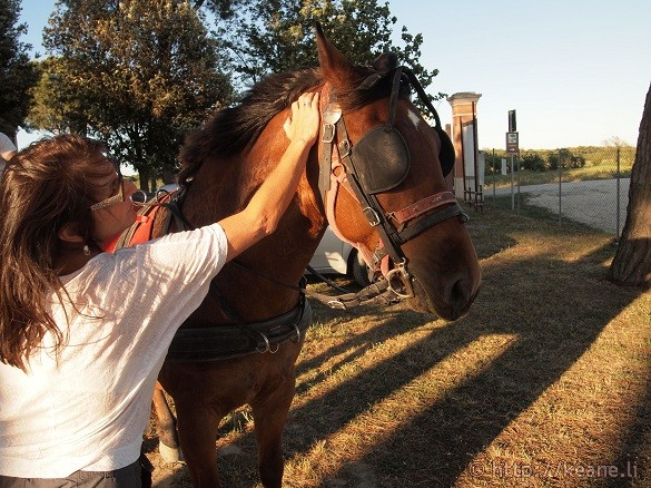 Horse - Foce Bevano in the Parco del Delta del Po in Savio, Emilia-Romagna