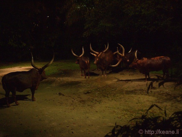 Singapore's Night Safari - Animals