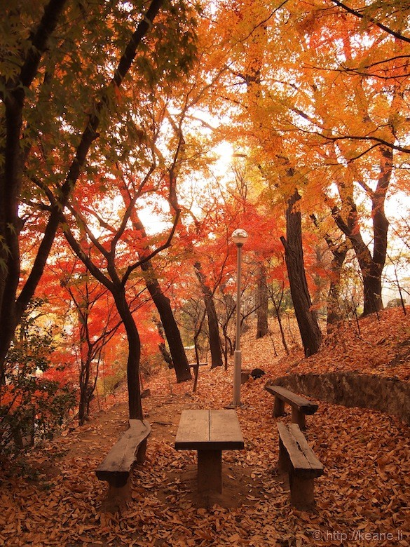 Red Autumn Leaves at the Seoul Women's University