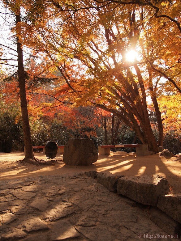 Red Autumn Leaves in Gyeongju Temple Grounds