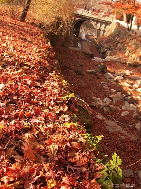 Red Autumn Leaves and Bridge in Gyeongju Temple Grounds