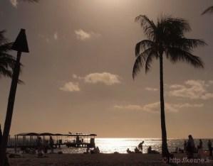 Sun Over Beach and Palm Tree