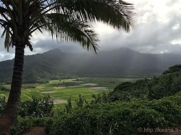 Kauai - Taro Fields in Hanalei