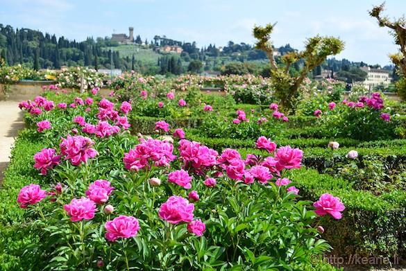 Flowers in the Boboli Gardens