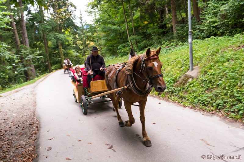 Horse and Carriage in Bled