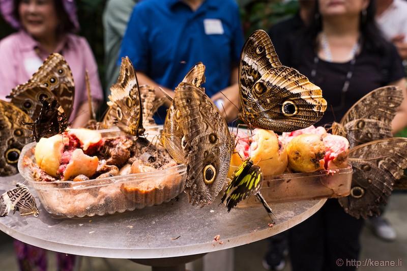 Butterfly Garden in Costa Rica