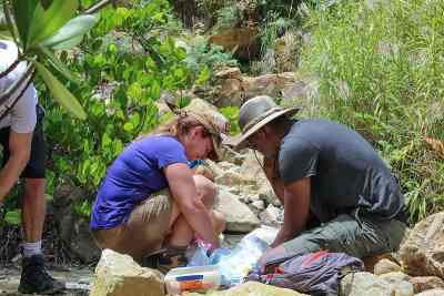 Dominica Sampling 2310