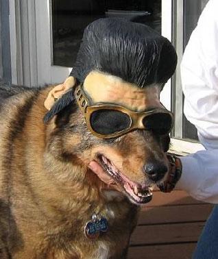 Lol Dog Grooming