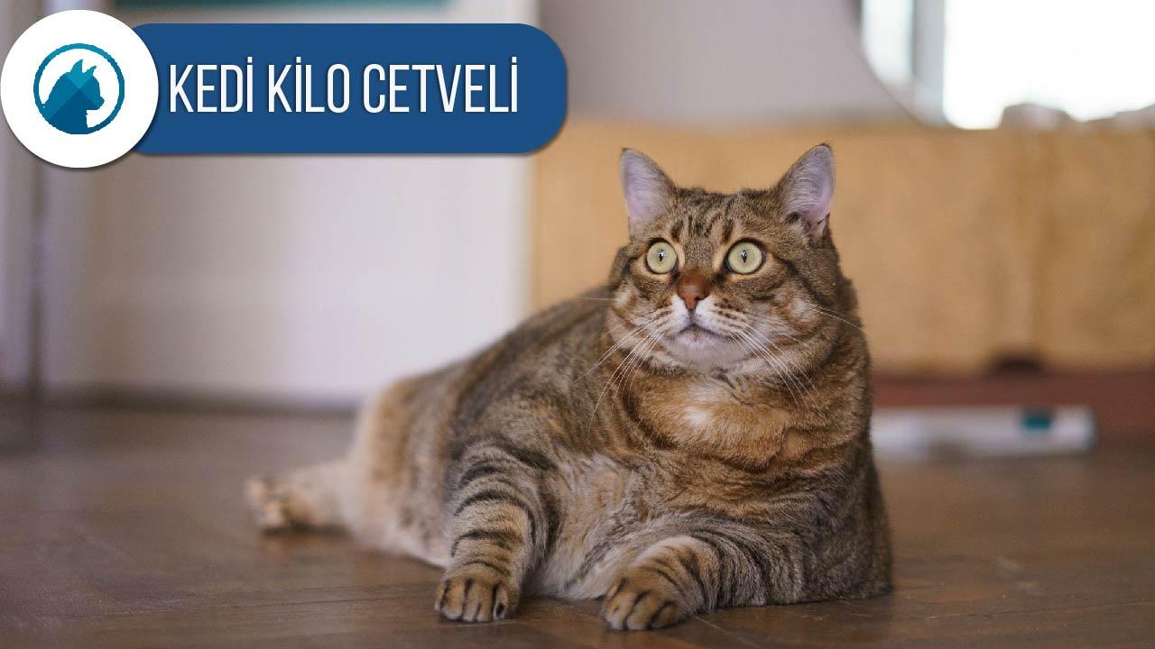 kedi-kilo-cetveli-ideal-kedi-kilosu-nasil-anlasilir