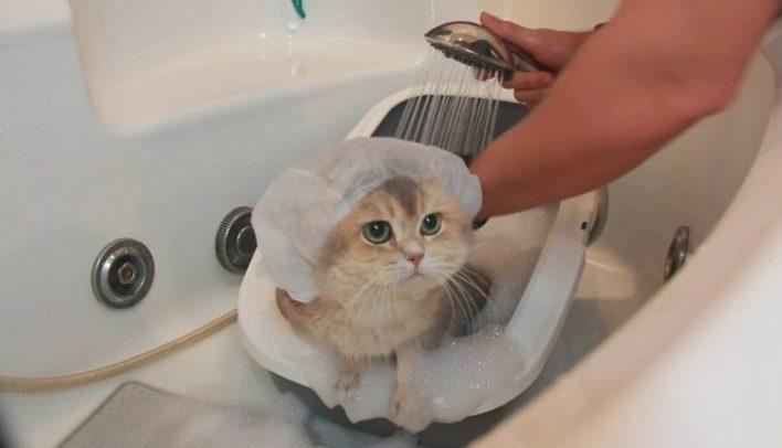 kedi-neyle-yikanir