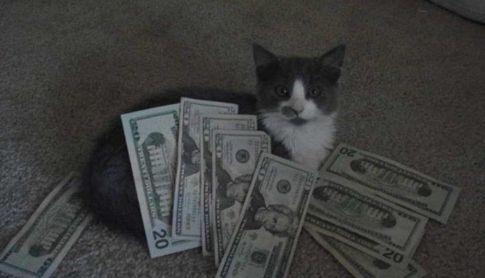 zengin-tuxedo-kedi