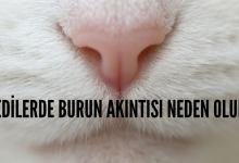 Photo of Kedilerde Burun Akıntısı Neden Olur?