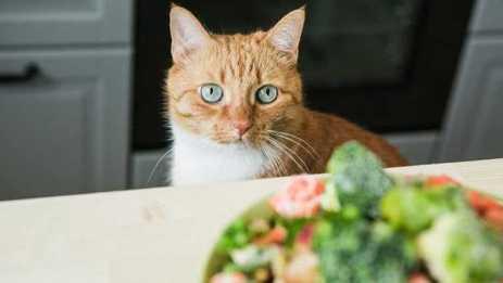 Kedilerin Yiyebileceği Yiyecekler
