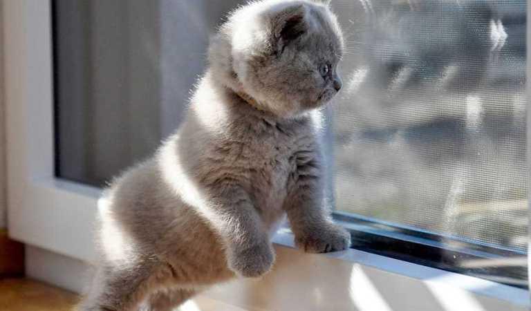 Kedilerde Doğum, Kediler Kaç Yavru Doğurur?