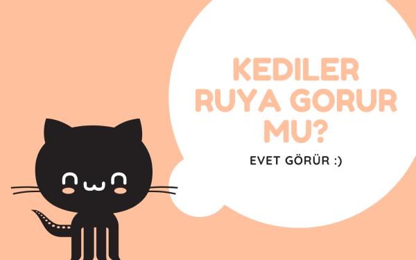 Kediler Rüya Görüyor Mu?