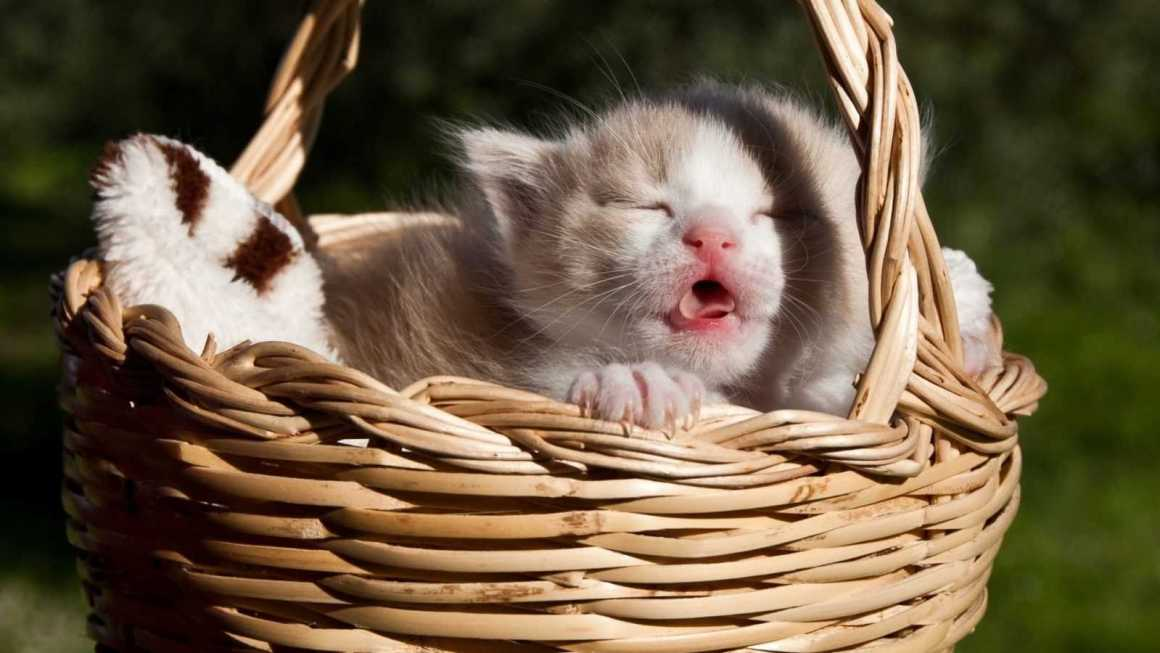 Tatlı Kedi Fotoğrafları
