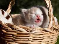 Yavru Kedi Fotoğrafları