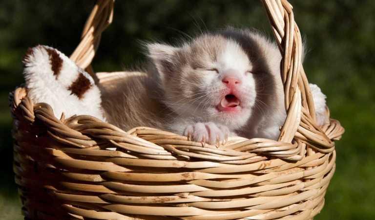 Kedilerin İnsan Sağlığına Faydaları