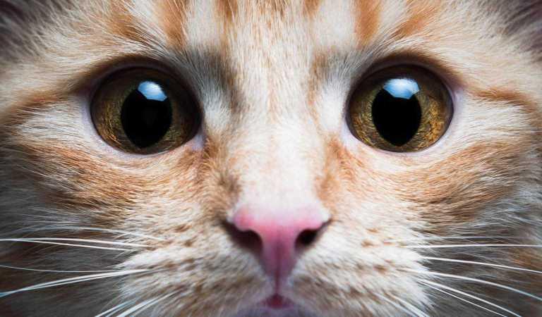 En iyi kedi kumu hangisi? Hangi kedi kumunu kullanmalıyım?