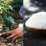 10 csodás kerti praktika, ami hamarosan nagy hasznodra lesz