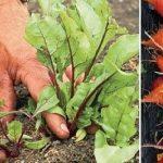 Ez a zöldség segít a betegségek megelőzésében, javítja a látást, tisztítja a vastagbelet és még ízletes is